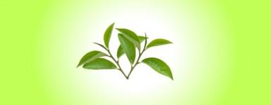 White tea series